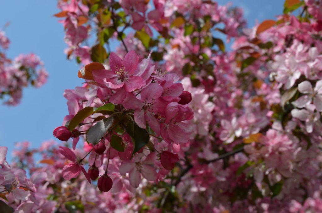 Приглашаем на майские праздники